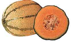 Vegetarians In Paradise Cantaloupe History Cantaloupe Nutrition Cantaloupe Folklore Cantaloupe Recipe The strange patterns on a cantaloupe may as well be a map of pluto for many shoppers. vegetarians in paradise cantaloupe